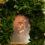 Πατρῶν Χρυσόστομος: «…Χωρίς τήν πίστη στό Θεό ἡ Ἑλλάδα οὒτε προχωράει, οὒτε ἐλευθερώνεται…»